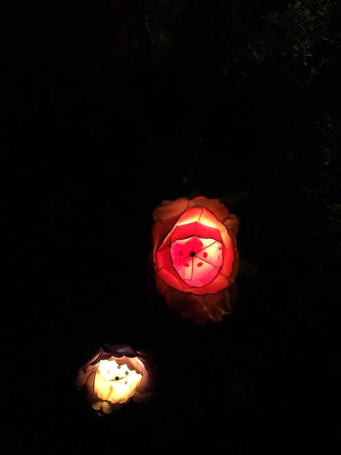 Lanternsix